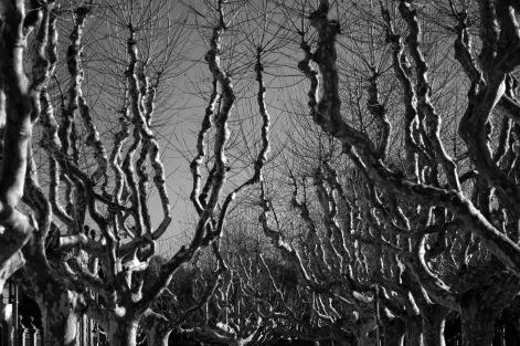 WeirdTrees